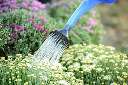 se16 garden maintenance service bermondsey